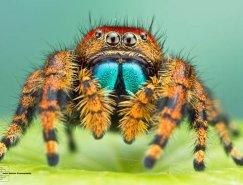 Colin Hutton昆虫微距摄影欣赏