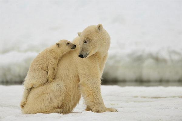 动物的爱:20个温馨的动物摄影欣赏(2)
