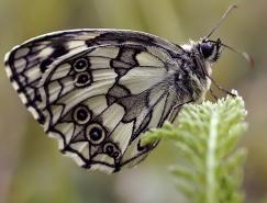 漂亮的昆虫微距摄影作品欣赏