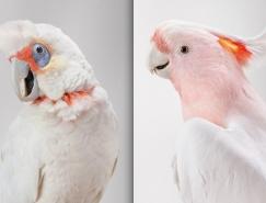 Leila Jeffreys鳥類肖像攝影欣賞