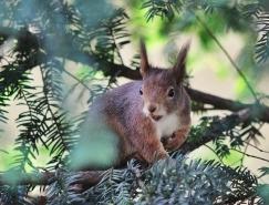 動物攝影欣賞:可愛的松鼠