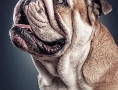 Daniel Sadlowski可爱狗狗肖像摄影
