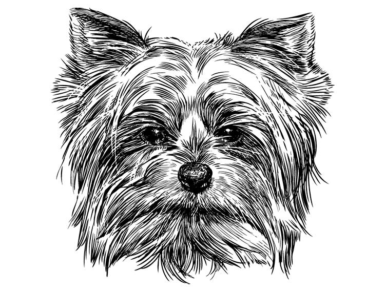 eps格式,狗狗,肖像,素描,手绘,矢量图