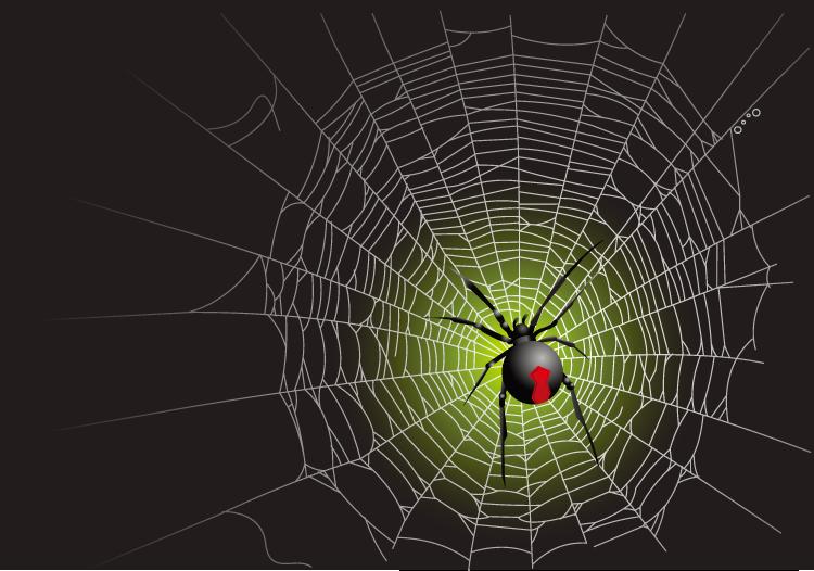 蜘蛛网和蜘蛛矢量素材