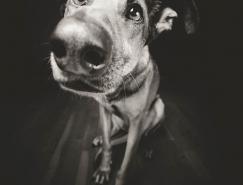德国摄影师Elke Vogelsang:狗狗肖像摄影