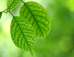 绿色背景的树叶高清图片