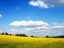 蓝天白云和油菜花海高清图片