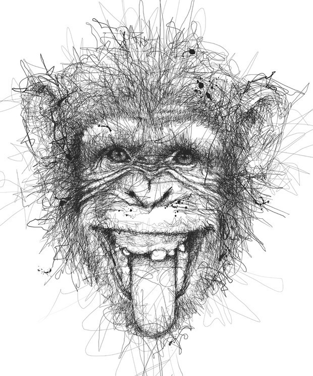 Line Drawing Of Monkey Face : Vince low动物铅笔画欣赏 设计之家