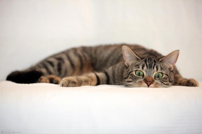 15个可爱猫咪摄影欣赏
