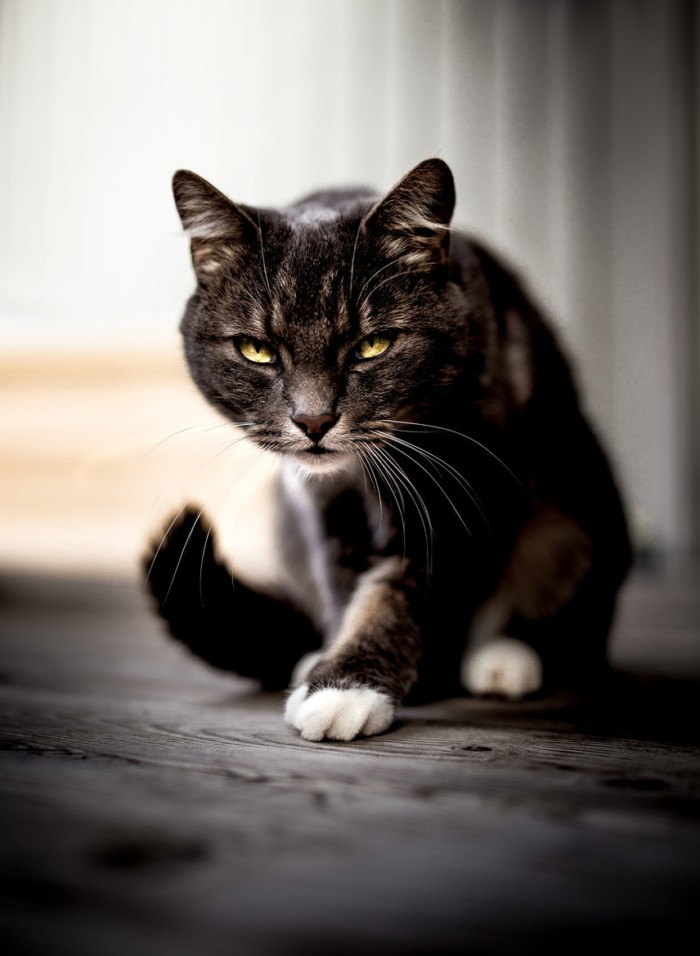 15个可爱猫咪摄影欣赏(2)