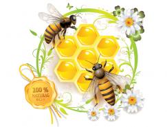 蜜蜂和蜂巢矢量素材