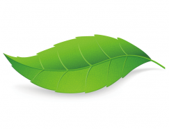 绿叶矢量素材