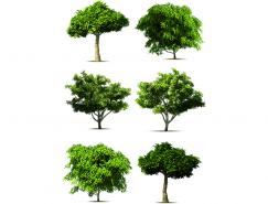 大树矢量素材