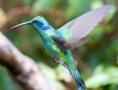 Chris Morgan鳥類攝影欣賞