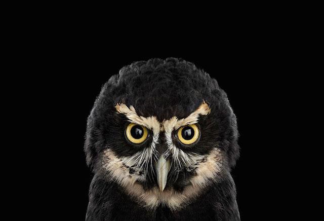 wilson野生动物肖像摄影