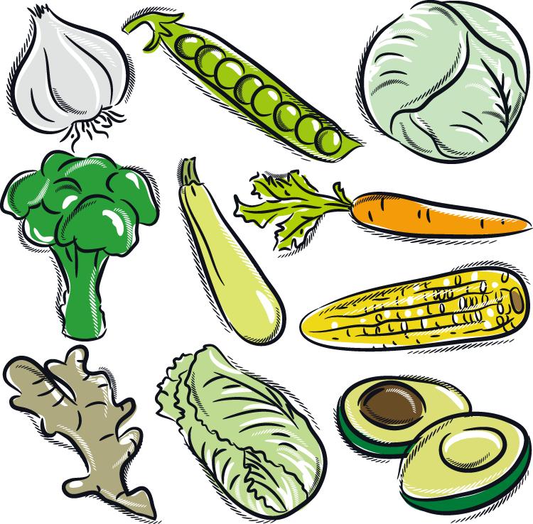 eps格式,手绘,蔬菜,洋葱,豌豆,卷心菜,西兰花,茄子,胡萝卜,玉米