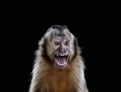 Brad Wilson野生动物肖像摄影