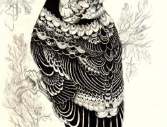 Iain Macarthur超精细动物铅笔画欣赏