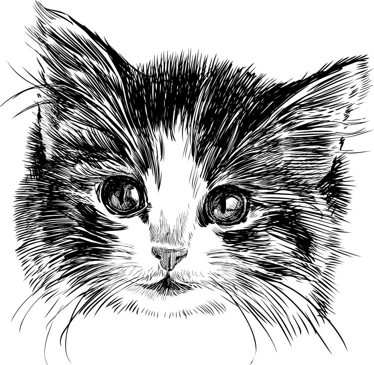 猫咪肖像素描矢量素材
