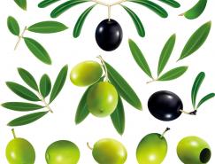 黑橄榄和绿橄榄矢量素材