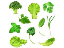 各种绿色蔬菜矢量素材