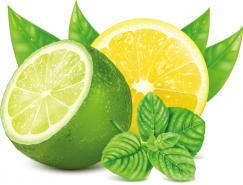 逼真檸檬矢量素材