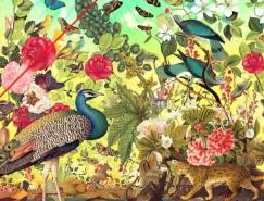 Eduardo Recife花鸟动物插画欣赏