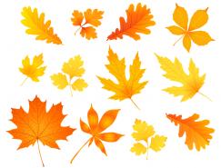 各种秋叶矢量素材(1)