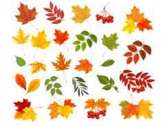 各种秋叶矢量素材(2)