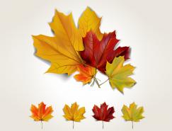 秋天美丽枫叶矢量素材