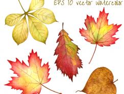 水彩風格秋葉矢量素材