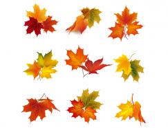 9个漂亮的秋天枫叶矢量素材