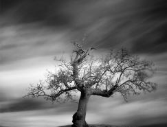 孤獨的樹:Andy Lee黑白攝影