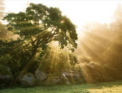 25张美丽的树摄影作品欣赏