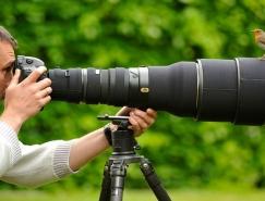 40张野生动物摄影获奖佳作欣赏