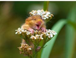 26張可愛的小老鼠攝影圖片欣賞
