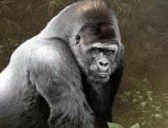 Fabrizio Caforio逼真写实的动物绘画作品