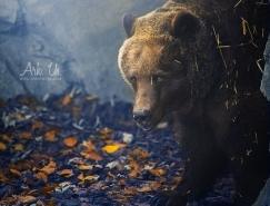 Julia Bénard動物攝影作品欣賞