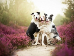 Alicja Zmyslowska镜头下的可爱狗狗
