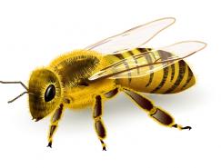 逼真的蜜蜂矢量素材