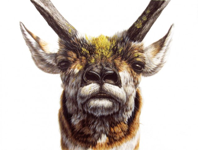 一位来自美国纽约的艺术家,他擅长绘制尺幅超大又逼真写实的动物绘画