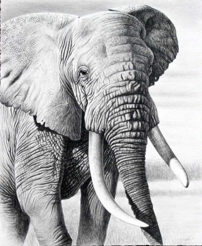 25张精细逼真的动物绘画作品欣赏