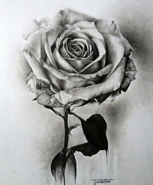 漂亮的玫瑰花绘画作品欣赏图片
