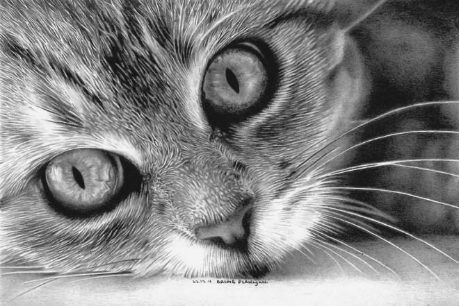 小猫素描画教程图解
