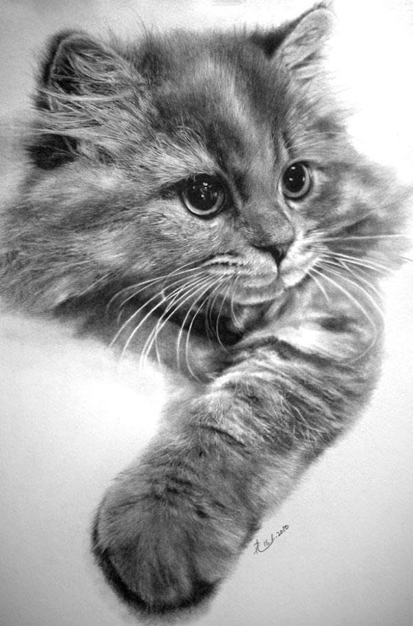 可爱小猫素描画