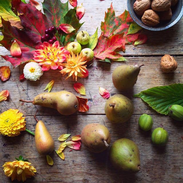 Philippa Stanton花卉摄影欣赏