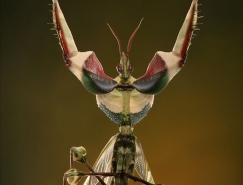 20个漂亮的昆虫微距摄影作品欣赏