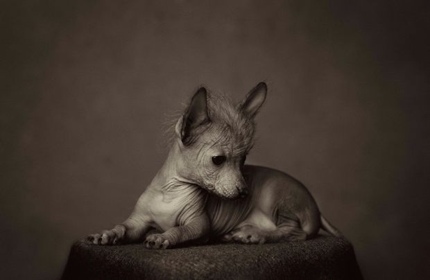 lagrange动物肖像摄影作品