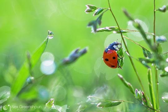 Alex Greenshpun唯美的花卉和自然摄影欣赏