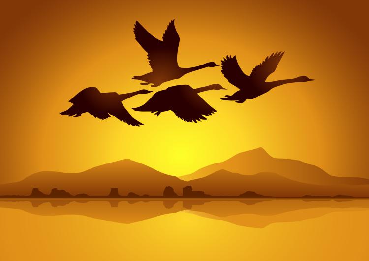 飞翔的天鹅与日落背景矢量素材